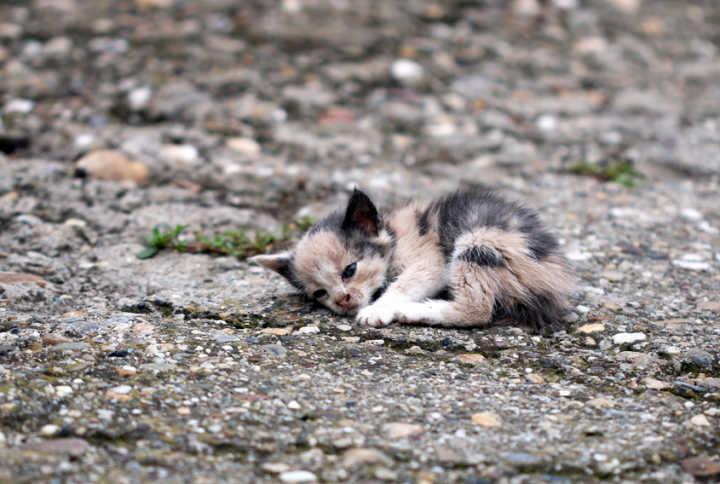 Prefeitura de Remígio inicia campanha de combate ao abandono e maus tratos de animais nas ruas da cidade.